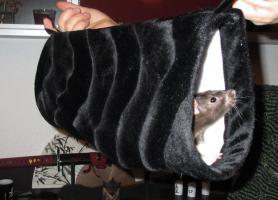 Foto 7 Rattentunnel , Hängematten o. Kirschkern Kissen
