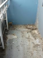 Foto 5 Reinigungsservice