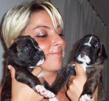 Foto 3 Reinrassige Boxer-Welpen aus Liebhaberzucht