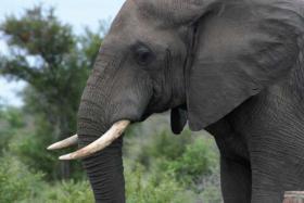 Foto 2 Reiseangebot Südafrika Addo Tour