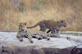 Foto 3 Reiseangebot Südafrika Addo Tour