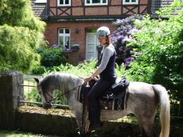 Foto 4 Reitbeteiligung auf Araberpferden