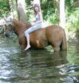 Reitbeteiligung für mein Tunierpferd