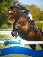 Foto 2 Reitbeteiligung ab 17 Jahre für meine 12  jährige Holsteiner Stute von Contender/ Lord.
