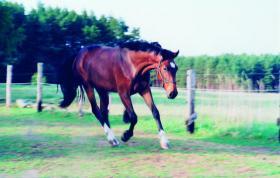 Foto 3 Reitbeteiligung ab 17 Jahre für meine 12  jährige Holsteiner Stute von Contender/ Lord.
