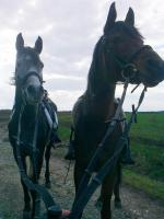 Reitbeteiligung für temperamentvolle Pferde