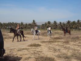 Foto 5 Reiten in Salalah, Oman