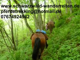 Reiten, Reitferien in Todtmoos Au, schwarzwald-wanderreiten