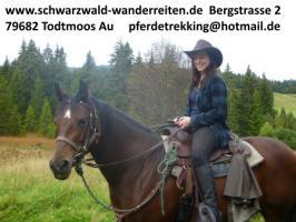 Foto 4 Reiten, Reitferien, Wanderreiten im Schwarzwald Todtmoos Au