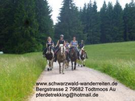 Foto 5 Reiten, Reitferien, Wanderreiten im Schwarzwald Todtmoos Au