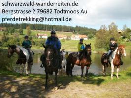 Foto 3 Reiten, Wanderreiten, Pferdetrekking, Urlaub im Sattel, schwarzwald-wanderreiten, Todtmoos Au