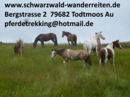 Reiten, Wanderreiten, Reitferien in Todtmoos Au, schwarzwald-wanderreiten