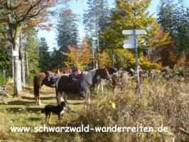 Foto 3 Reiten, Wanderreiten, Reitlager, Tagesritte, Reitferien, Pferdetrekking rund um den Feldberg
