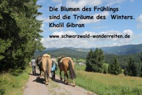 Foto 10 Reiten, Wanderreiten, Reitlager, Tagesritte, Reitferien, Pferdetrekking rund um den Feldberg