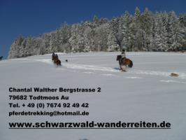 Foto 3 Reitferien für Frauen Tagestouren und Mehrtagestouren Wanderreiten im Schwarzwald