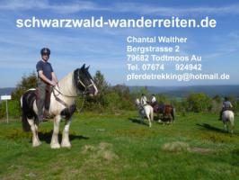 Reitferien für Frauen Wanderreiten im Schwarzwald