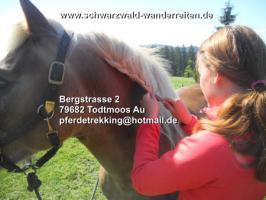 Reitferien für Jugendliche - schwarzwald-wanderreiten - Todtmoos Au