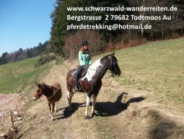 Foto 6 Reitferien für Jugendliche - schwarzwald-wanderreiten - Todtmoos Au