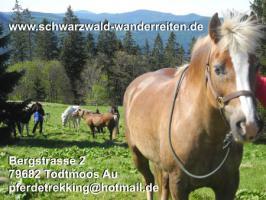 Foto 8 Reitferien für Jugendliche - schwarzwald-wanderreiten - Todtmoos Au