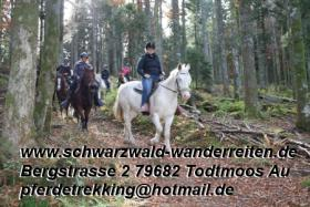 Foto 9 Reitferien im Naturpark Südschwarzwald Todtmoos Au