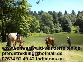 Foto 4 Reitferien im Schwarzwald Todtmoos Au