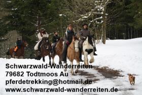 Foto 3 Reitferien in Todtmoos Au - Wanderreiten für Erwachsene Freizeitreiter, Westernreiter, Neueinsteiger