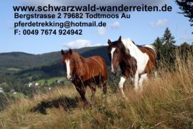 Reitferien schwarzwald-wanderreiten Todtmoos Au
