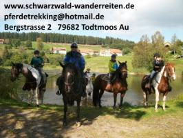 Foto 4 Reitferien, Reiten ab Todtmoos Au, schwarzwald-wanderreiten