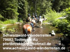 Foto 8 Reitferien, Reiten ab Todtmoos Au, schwarzwald-wanderreiten