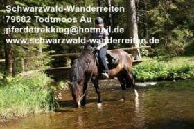 Foto 3 Reitferien, Wanderreiten im Schwarzwald Todtmoos Au