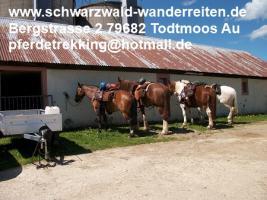 Foto 11 Reitferien, Wanderreiten, Entschleunigen im Schwarzwald Todtmoos Au