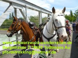 Foto 13 Reitferien, Wanderreiten, Entschleunigen im Schwarzwald Todtmoos Au