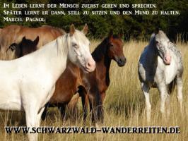 Foto 34 Reitferien, Wanderreiten, Entschleunigen im Schwarzwald Todtmoos Au