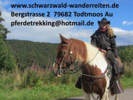 Foto 2 Reitferien, Wanderreiten, Reitausflüge, Tagestouren, Pferdetrekking Todtmoos Au, schwarzwald-wanderreiten