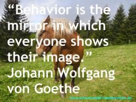 Foto 10 Reitferien, Wanderreiten, Tagestouren, Pferdetrekking rund um den Feldberg