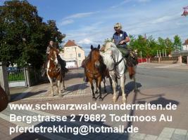 Reitferien, Wanderreiten, Urlaub im Sattel, Tagestouren, Reiten, Pferdetrekking ab Todtmoos Au