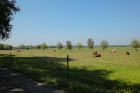 Restbauernhof / Reitanlage für gewerbl. Tierhaltung