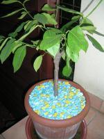 Foto 3 Restposten von Dekosteinen für Pflanzen