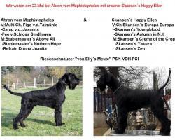 Riesenschnauzer Welpen in schwarz VDH-PSK-FCI Mutter:USA-IMPORT