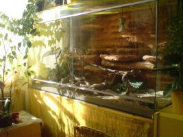 Riesiges Glasterrarium inkl. Einrichtung