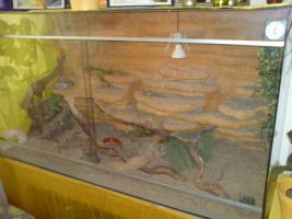 Foto 3 Riesiges Glasterrarium inkl. Einrichtung