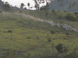 Rinderfarm in Paraguay Südamerika zu verkaufen