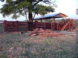Foto 3 Rinderfarm in Paraguay Südamerika zu verkaufen