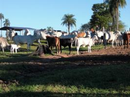Foto 5 Rinderfarm in Paraguay Südamerika zu verkaufen