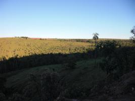 Foto 7 Rinderfarm in Paraguay Südamerika zu verkaufen