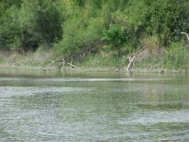 Foto 3 Romantisches kleines Grundstück in Ungarn