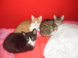 Foto 2 Rot-Weißer Kater mit blauen Augen