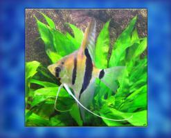 Rotr�ckenskalar M�nnchen