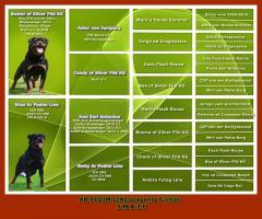 Rottweiler Welpen zu verkaufen