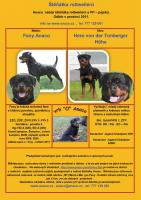 Foto 7 Rottweiler - puppy dogs with pedigree